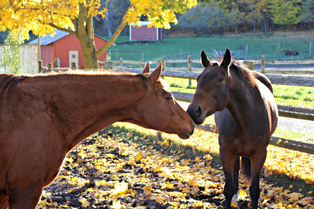 fallhorses