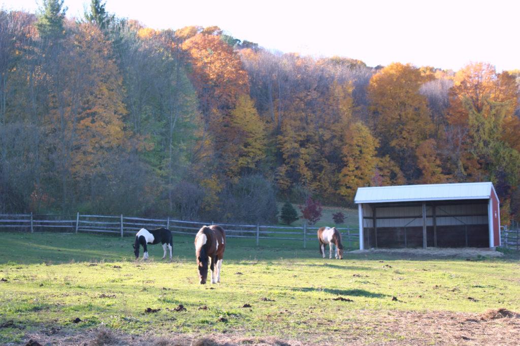 horsesfall2